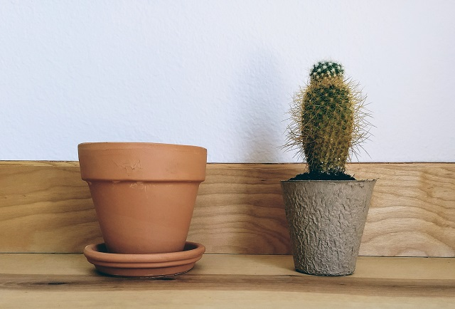 a cactus in a small paper pot sitting next to an empty clay pot.